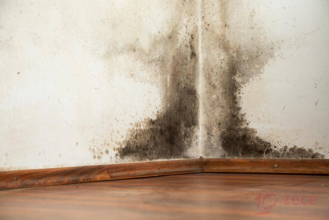 Care sunt efectele mucegaiului asupra sanatatii